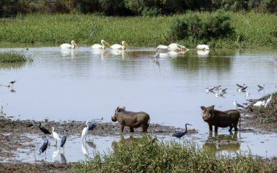 Le Parc national de Diawling ou la reserve de Biosphère transfrontalière du delta du fleuve Sénégal.